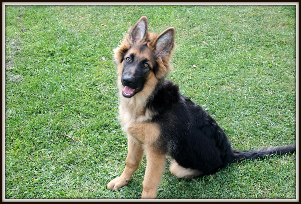 7 powodów dla których warto mieć psa www.glowlifestyle.pl-002