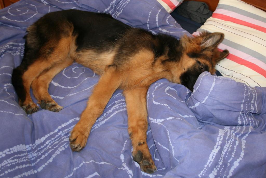 7 powodów dla których warto mieć psa