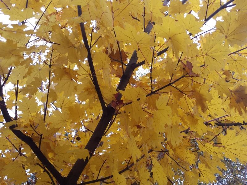 lekcje fotografi www.glowlifestyle.pl-009